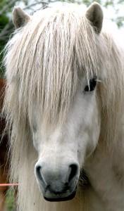 Barlien, Namsos, Vemundvik, hest